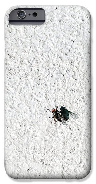 Fly On A Wall IPhone Case by Alexander Senin