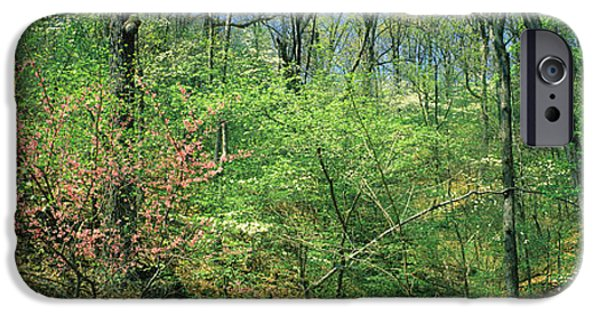 Forest, Trail Of Tears, Shawnee IPhone 6s Case by Panoramic Images