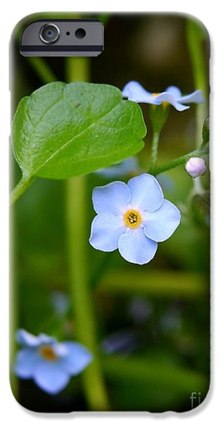 Forget Me Not IPhone Case by John Chatterley