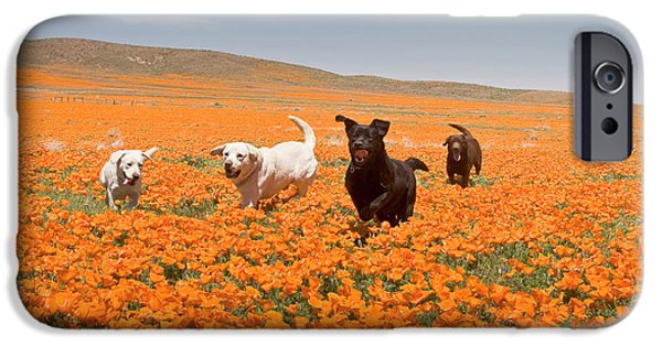 Four Labrador Retrievers Running IPhone Case by Zandria Muench Beraldo