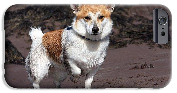 Terrier At The Beach IPhone Case by Aidan Moran