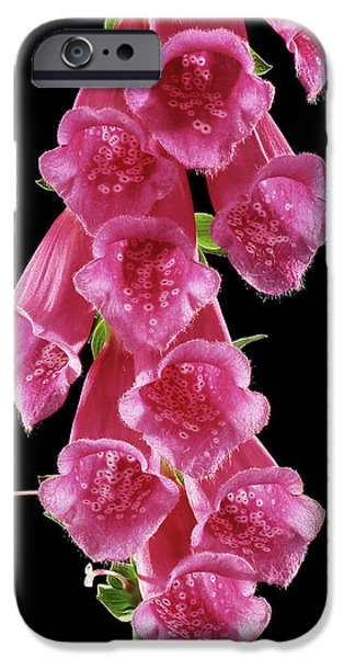 Foxglove (digitalis Purpurea) IPhone Case by Gilles Mermet