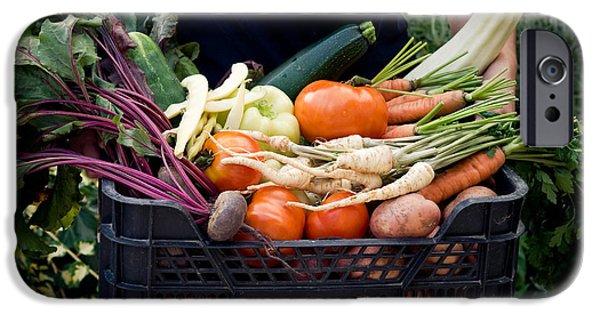 Fresh Organic Vegetables IPhone Case by Viktor Pravdica