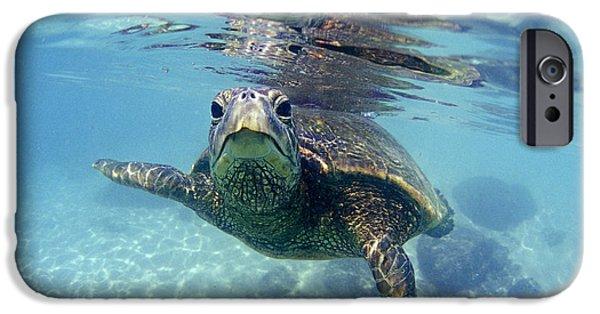 friendly Hawaiian sea turtle  IPhone 6s Case by Sean Davey