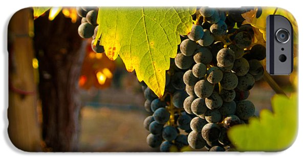 Fruit Of The Vine IPhone Case by Bill Gallagher