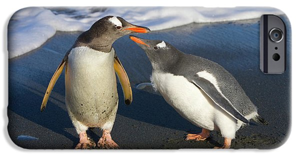 Gentoo Penguin Chick Begging For Food IPhone 6s Case by Yva Momatiuk and John Eastcott