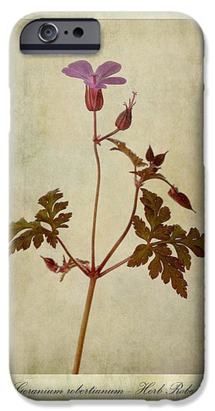 Geranium Robertianum IPhone Case by John Edwards