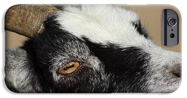 Goat 5d27189 IPhone Case by Wingsdomain Art and Photography