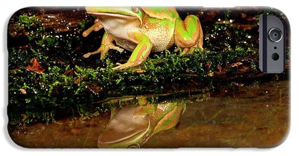 Golden Bell Treefrog, Litoria Aurea IPhone Case by David Northcott