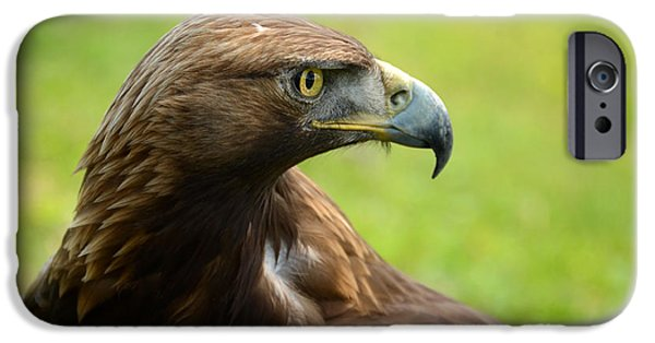 Golden Eagle IPhone Case by RicardMN Photography