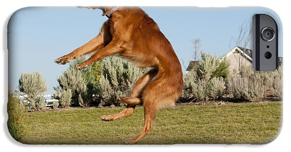 Golden Retriever Catching A Ball IPhone Case by William H. Mullins