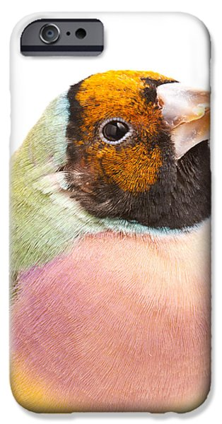 Gouldian Finch Erythrura Gouldiae IPhone 6s Case by David Kenny