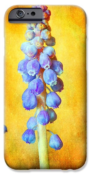 Grape Hyacinth IPhone Case by Bellesouth Studio