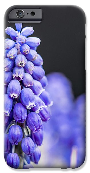 Grape Hyacinth IPhone Case by Jon Woodhams