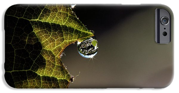 Grape Leaf With Rain Drop IPhone Case by Cindi Ressler