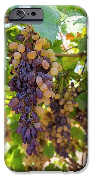 Grapes Growing In Bakersfield IPhone Case by Ashley Cooper