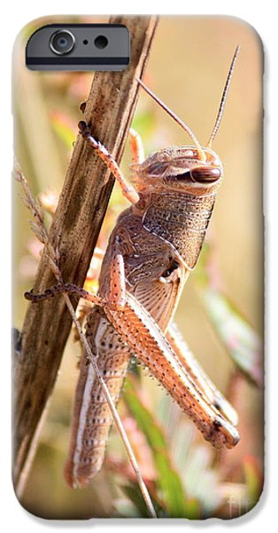 Grasshopper In The Marsh IPhone 6s Case by Carol Groenen