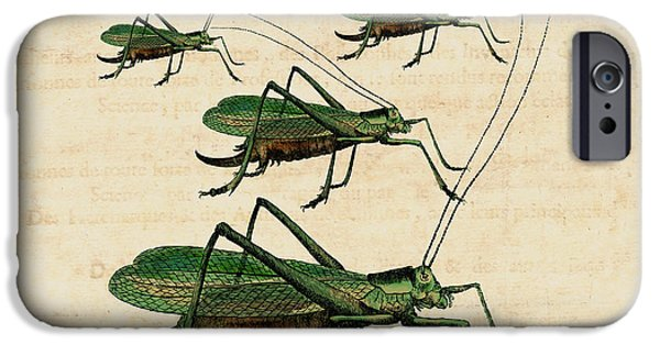Grasshopper Parade IPhone 6s Case by Antique Images