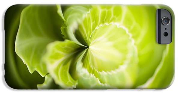 Green Cabbage Orb IPhone 6s Case by Anne Gilbert