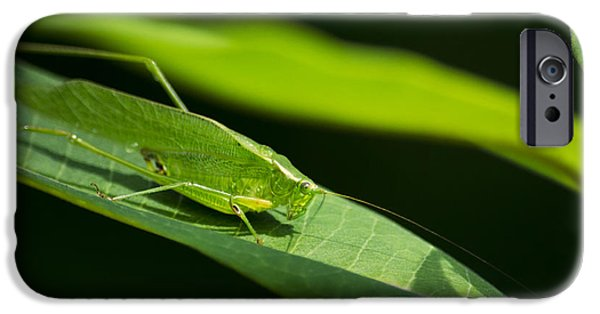 Green Katydid IPhone 6s Case by Christina Rollo