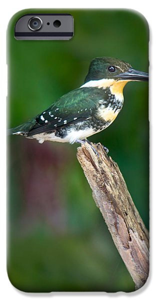 Green Kingfisher Chloroceryle IPhone 6s Case by Panoramic Images