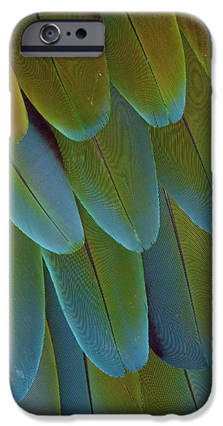 Green-winged Macaw Wing Feathers IPhone 6s Case by Darrell Gulin