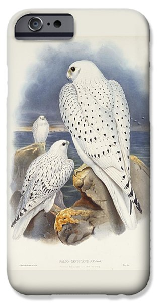 Greenland Falcon IPhone 6s Case by John Gould