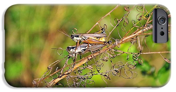 Gregarious Grasshoppers IPhone 6s Case by Al Powell Photography USA