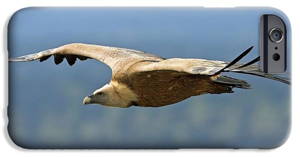 Griffon Vulture In Flight IPhone 6s Case by Bildagentur-online/mcphoto-schaef