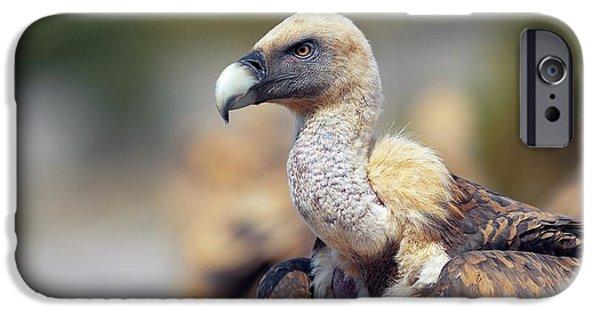 Griffon Vulture IPhone 6s Case by Nicolas Reusens