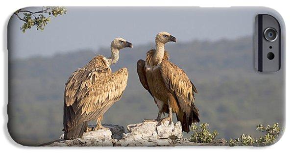Griffon Vulture Pair Extremadura Spain IPhone 6s Case by Gerard de Hoog