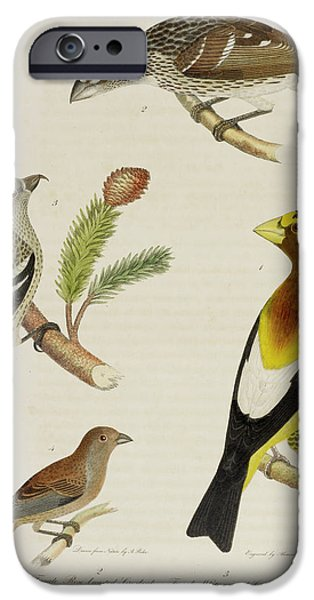 Grosbeak And Crossbill IPhone 6s Case by British Library