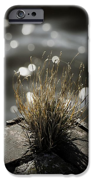 Growing Out Of Nothing IPhone Case by Thomas Young