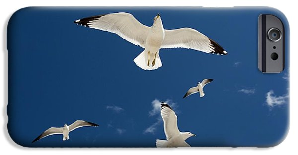 Gulls Flying Against Blue Sky IPhone Case by Jim West
