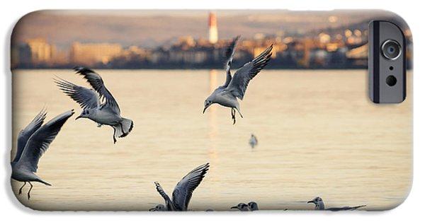 Gulls IPhone Case by Jelena Jovanovic