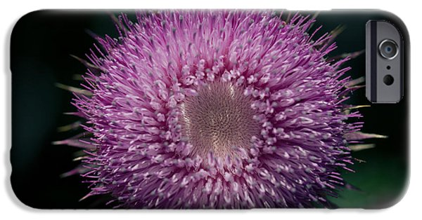 Gynormous Thistle IPhone Case by Shane Holsclaw
