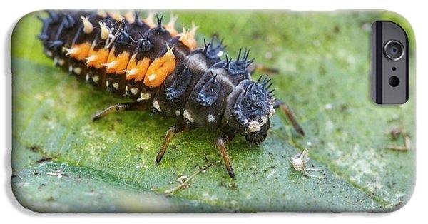 Harlequin Ladybird Larva IPhone 6s Case by Heath Mcdonald