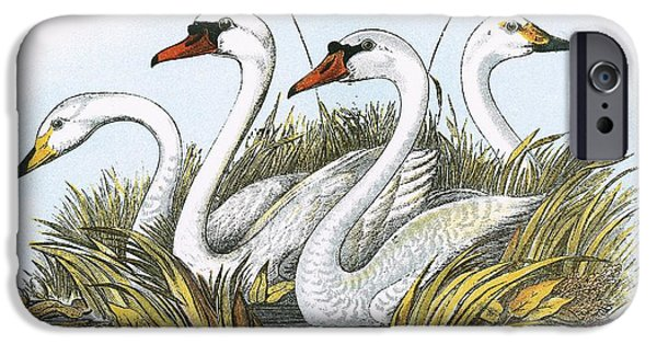 Heads Of Species Of British Swans IPhone Case by English School