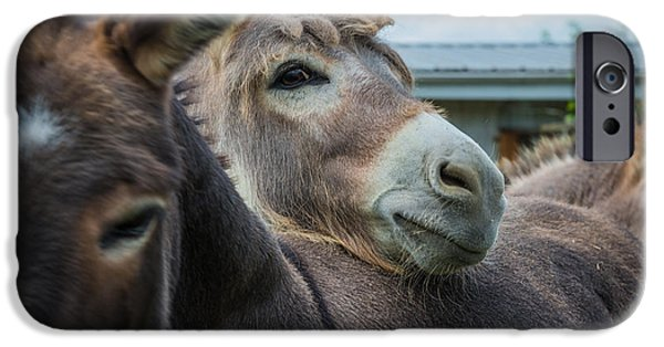 Hello Donkey IPhone Case by Kristopher Schoenleber