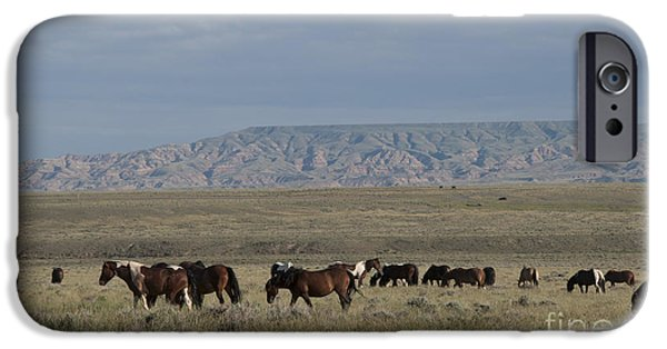 Herd Of Wild Horses IPhone Case by Juli Scalzi
