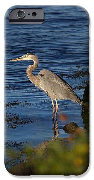 Heron 5 IPhone Case by Allan Morrison