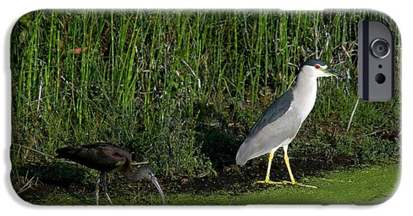 Heron And Ibis IPhone 6s Case by Mark Newman