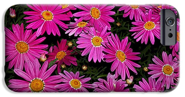 Hot Pink Daisies IPhone Case by Kaye Menner