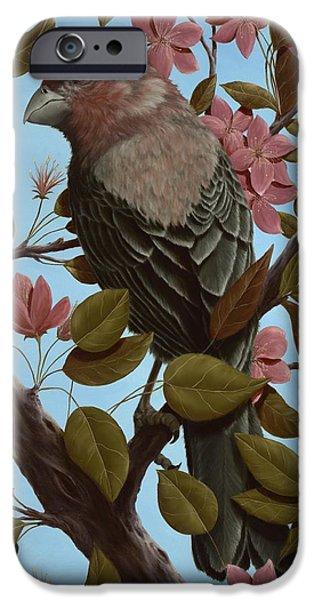 House Finch IPhone 6s Case by Rick Bainbridge