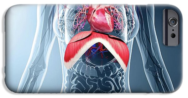 Human Respiratory System IPhone Case by Pixologicstudio