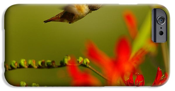 Hummingbird In A Rush IPhone Case by Jeff Swan