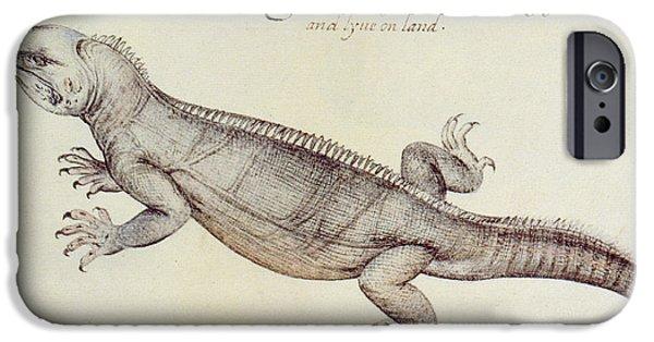 Iguana IPhone Case by John White