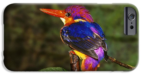 India Three Toed Kingfisher IPhone 6s Case by Anonymous