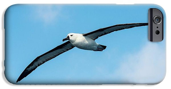 Indian Ocean Yellow-nosed Albatross IPhone 6s Case by Peter Chadwick