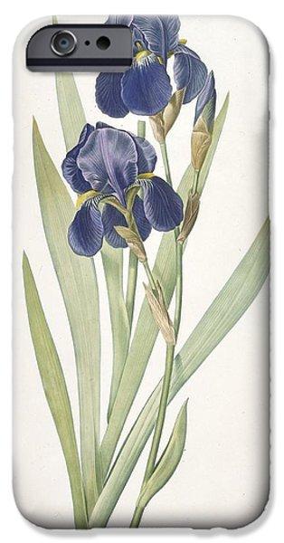 Iris Germanica Bearded Iris IPhone 6s Case by Pierre Joseph Redoute